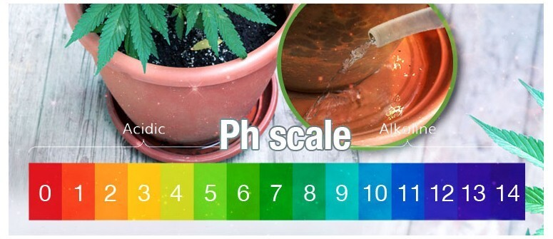 Non possiamo dimenticare che lo sviluppo e la crescita è una delle fasi principali del ciclo di vita della pianta di cannabis.