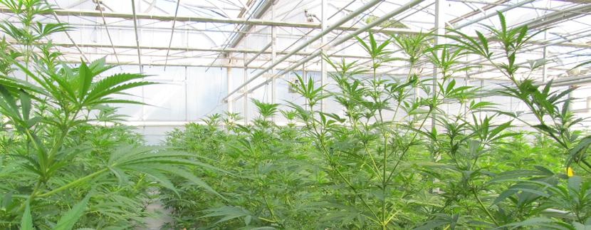 La coltivazione in serra GreenHouse