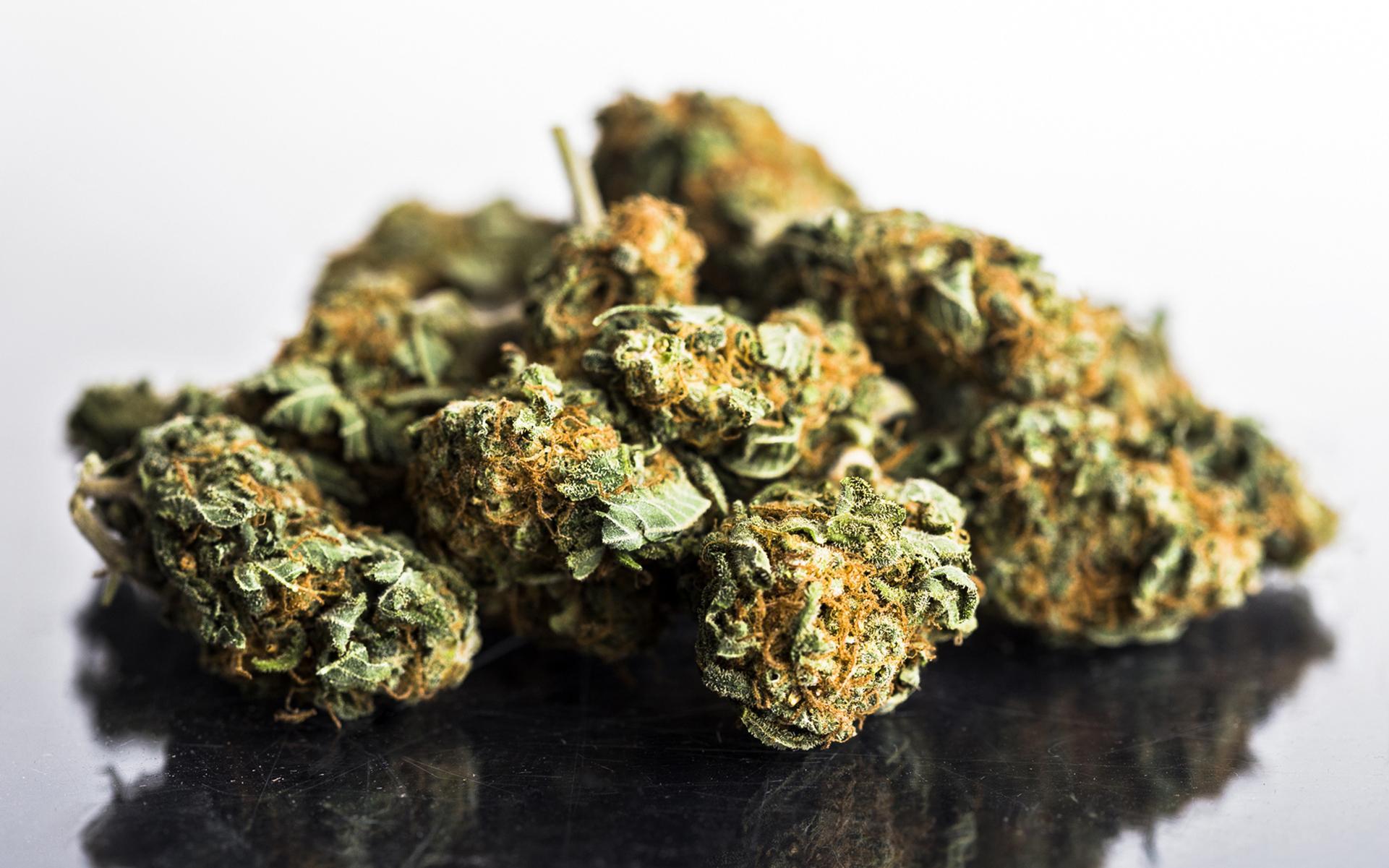 Marijuana high in thc
