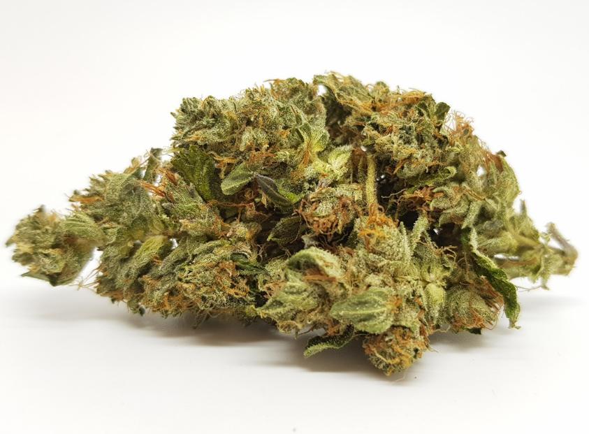 La Northern Lights compare tra le varietà di cannabis indica quasi pure presenti attualmente, sebbene la sua fama la preceda da sempre: la sua ottima reputazione risale infatti a numerosi decenni fa.