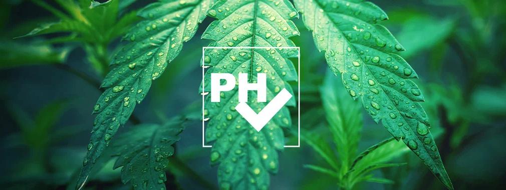 Il potenziale di idrogeno, meglio conosciuto come pH, è un'unità di misura che va da 0 a 14 e aiuta a capire l'alcalinità o l'acidità in base agli ioni idrogeno concentrati in una sostanza.