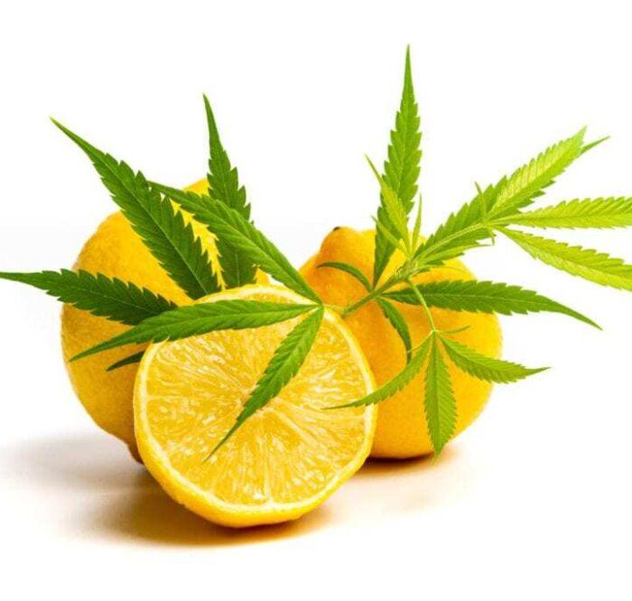 Il limonene è una sostanza chimica, facente parte della categoria dei terpeni, o meglio, dei monoterpeni ciclici. Il suo aspetto è incolore e, presenta la caratteristica di essere insolubile nell'acqua ma solubile negli olii e nell'alcool.