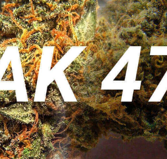 Ak47 cannabis marijuana
