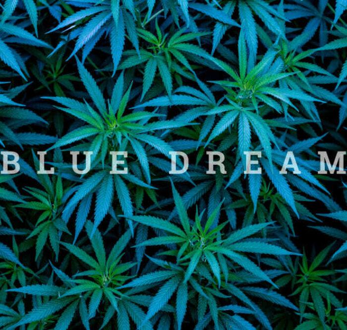 Cannabis blue dream
