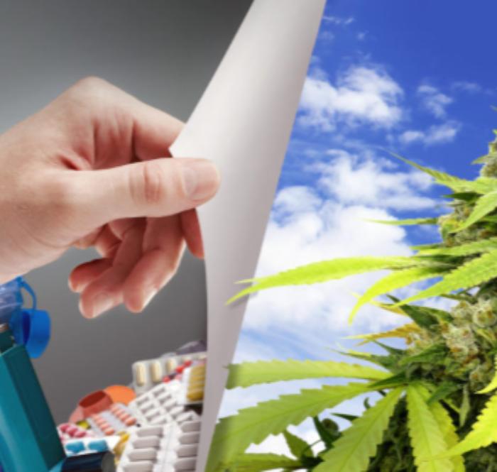 Cannabis effetti terapeutici organismo