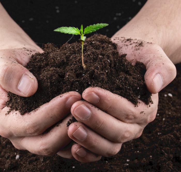 Composto organico e sintetico per la coltivazione di cannabis