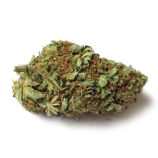 Sweetcheese Bud
