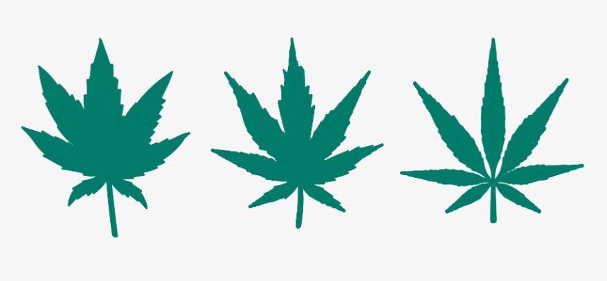 Quali tipologie di marijuana ci sono