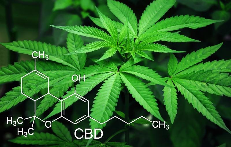 La vendita di olio di cannabis o di cannabis light o depotenziata è regolata dalla legge 242 del 2016, in vigore dal 14 gennaio 2017 e che prevede la possibilità di commercializzare prodotti a base di canapa.