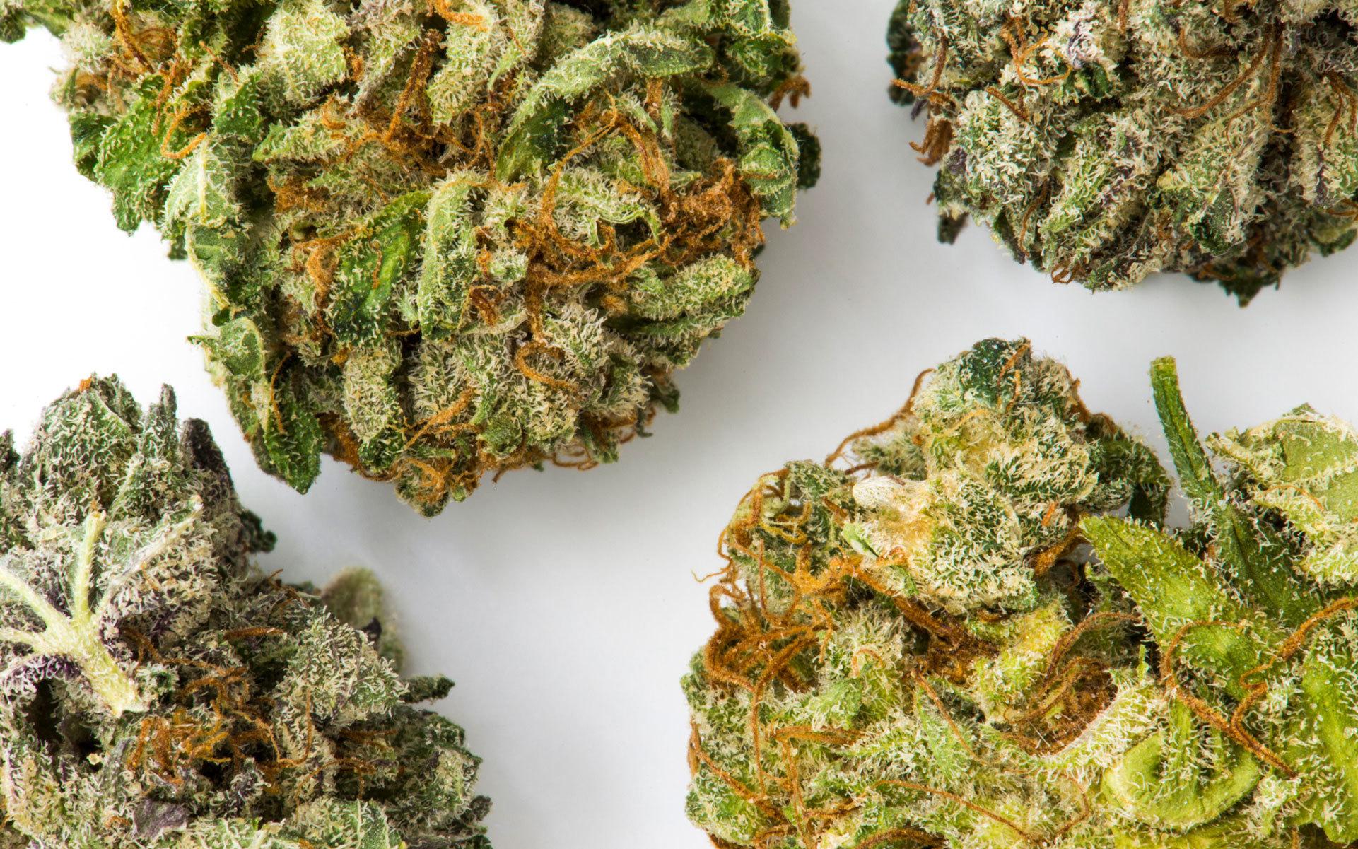 Acquistare erba buona e di qualità non è certo un fattore da sottovalutare: è infatti proprio la qualità della cannabis a garantire un'esperienza ricreativa legata all'assunzione, piacevole ed appagante.