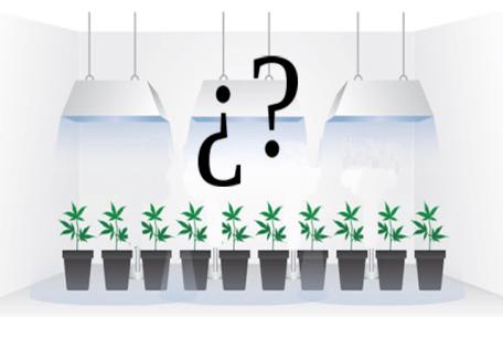 Quali fattori tenere in considerazione quando scegliamo le lampade per la coltivazione indoor di marijuana