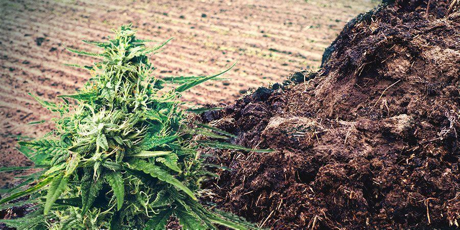 Concimi naturali cannabis