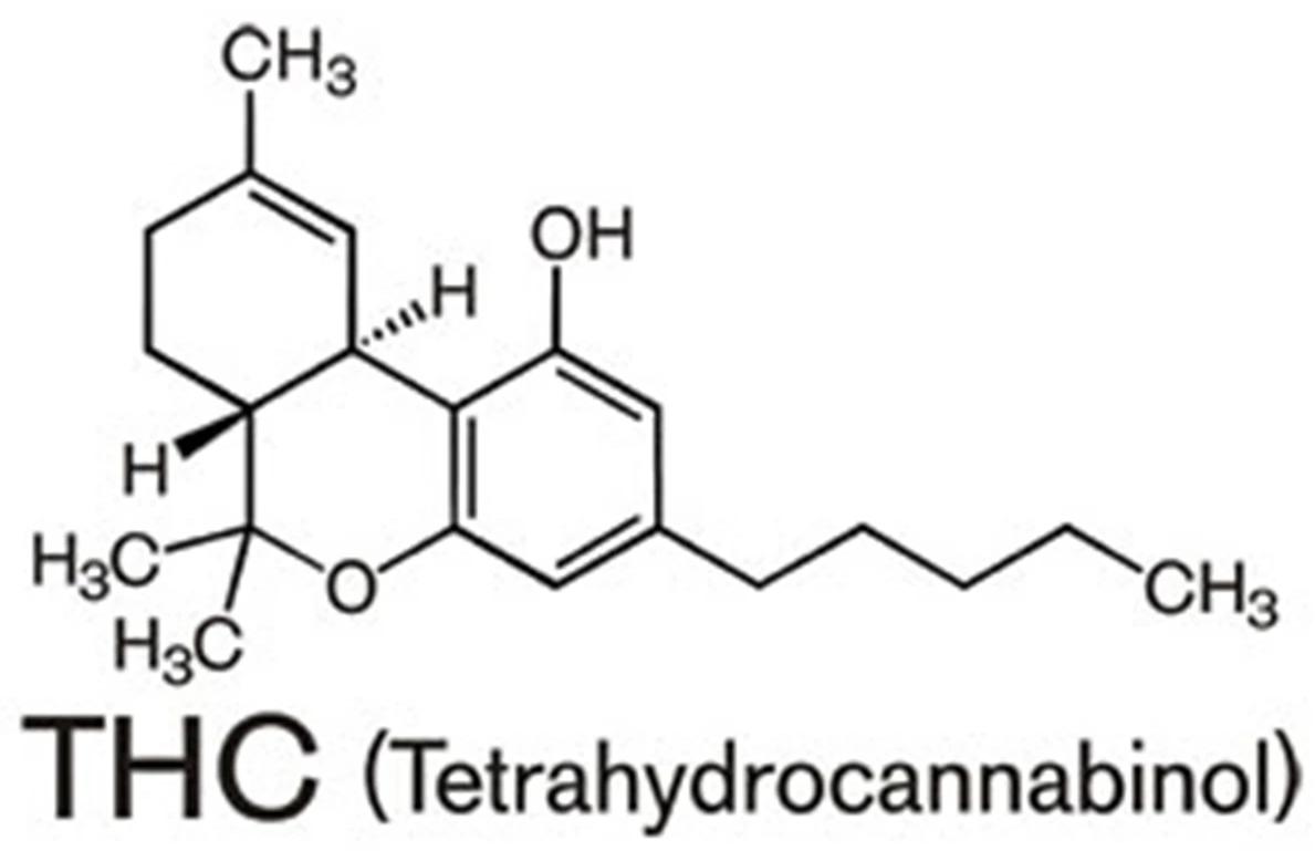 Il THCo tetracannabidiolo è il principale responsabile chimico di quelli che generalmente sono gli effetti psicologici e psicoattivi dati dall'assunzione di cannabis sativa