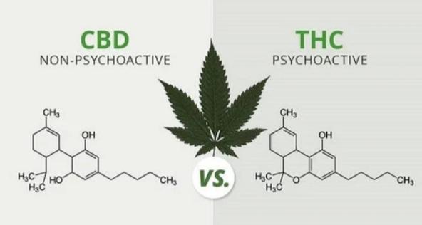 Cos'è il THC e perché è diverso dal CBD