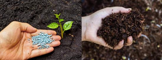 Per concimi si intendono elementi nutritivi di tipo naturale e per fertilizzanti elementi nutritivi derivanti dalla sintesi chimica