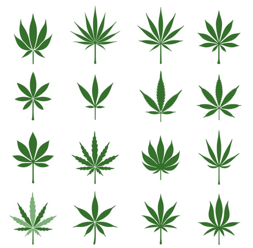 Tutto quello di cui avrete bisogno per capire la salute delle vostre piante di cannabis è conoscere bene le foglie di cannabis.