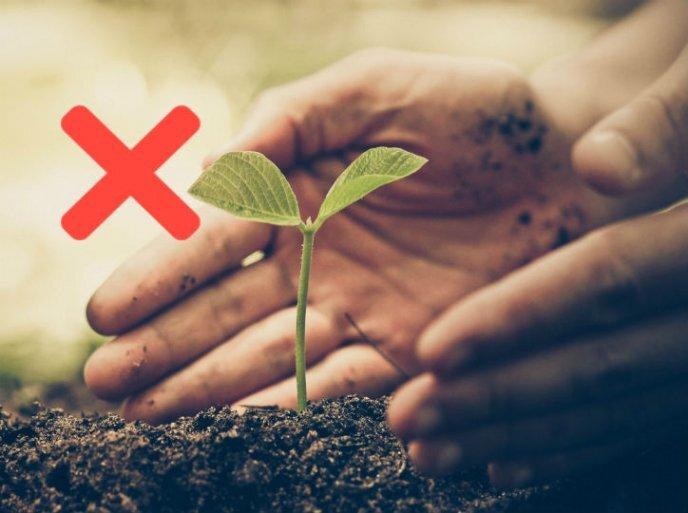 Concludiamo la nostra guida, elencando gli errori più comuni da evitare durante la fase di germinazione.