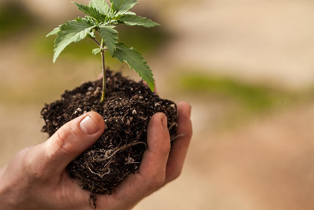 Il terrricio migliore per cannabis