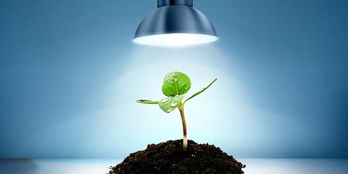 Quante tipologie di lampade per cannabis esistono