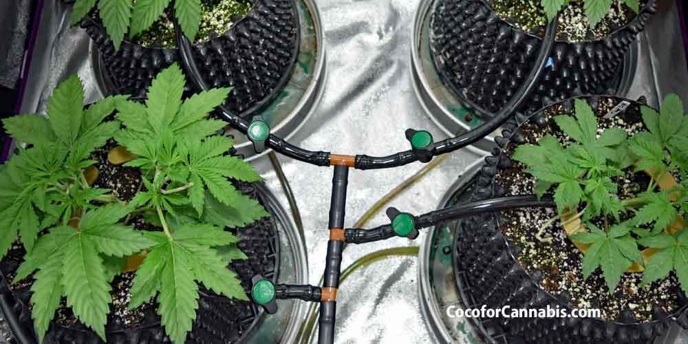 Come innaffiare le piante e mantenerle idratate