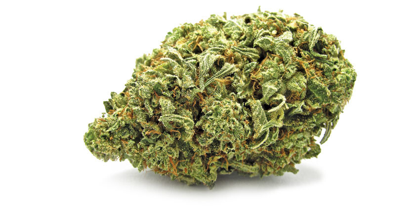 Gorilla Glue è senza alcun dubbio la varietà di marijuana che, a distanza di anni spopola ancora prepotentemente non solo nella Weast Coast ma in ogni parte del mondo.