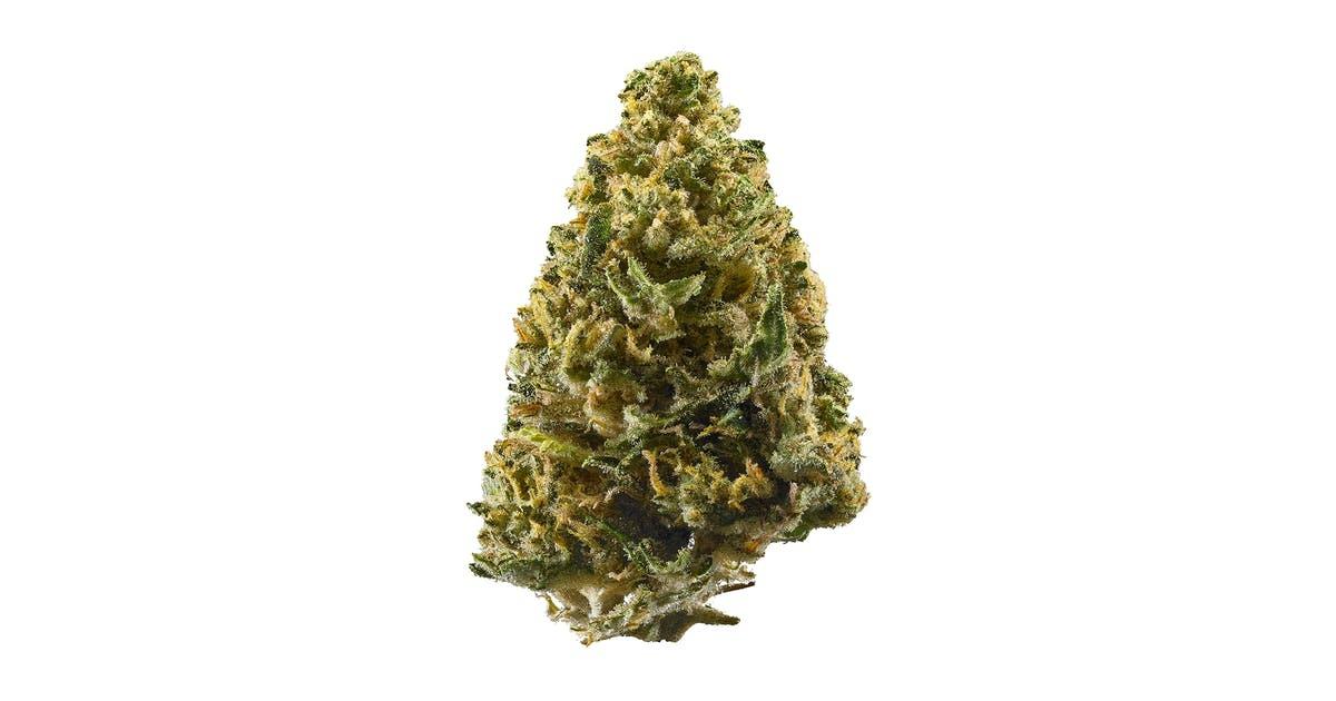 La varietà di cannabis Northern Lights rappresenta il fulcro di innumerevoli genetiche classiche e pluripremiate nella storia della marijuana.