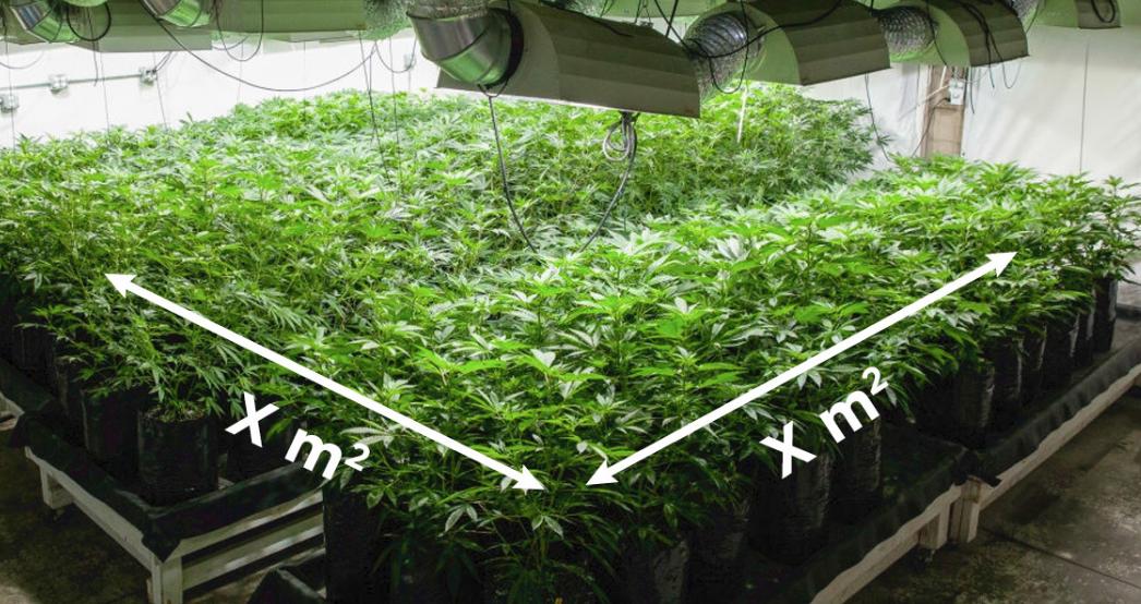 Quante piante si possono coltivare per metro quadro?