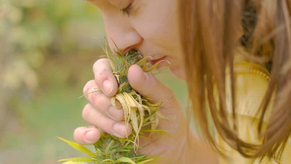 Quando l'erba è buona: riconoscere la marijuana di qualità