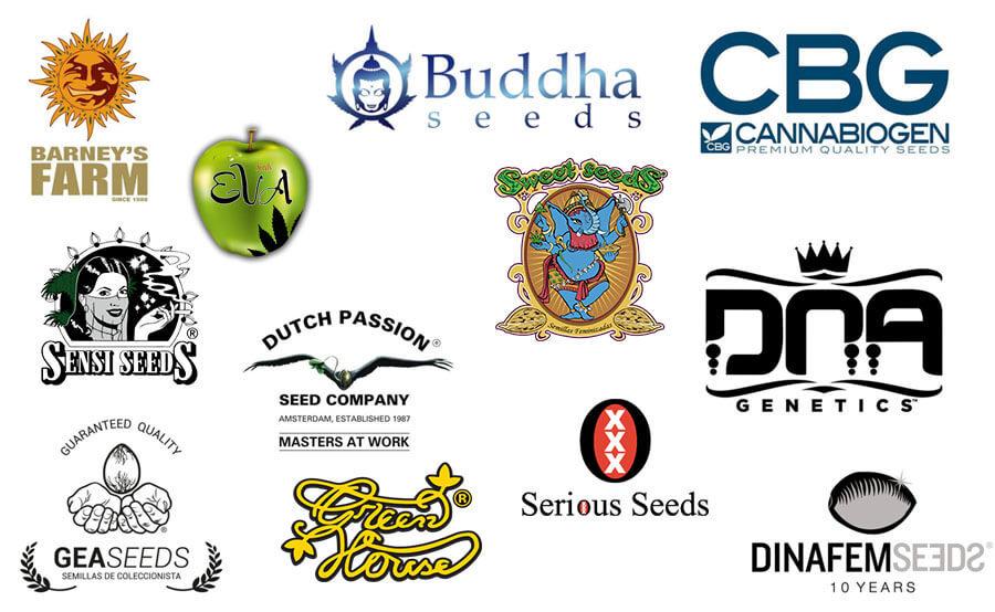 Principali tipi di semi di marijuana