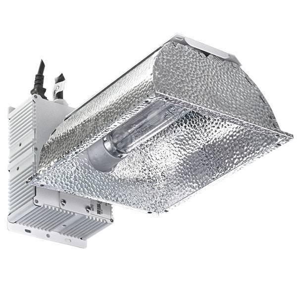 Coltivare canapa con la tecnologia LED o LEC?