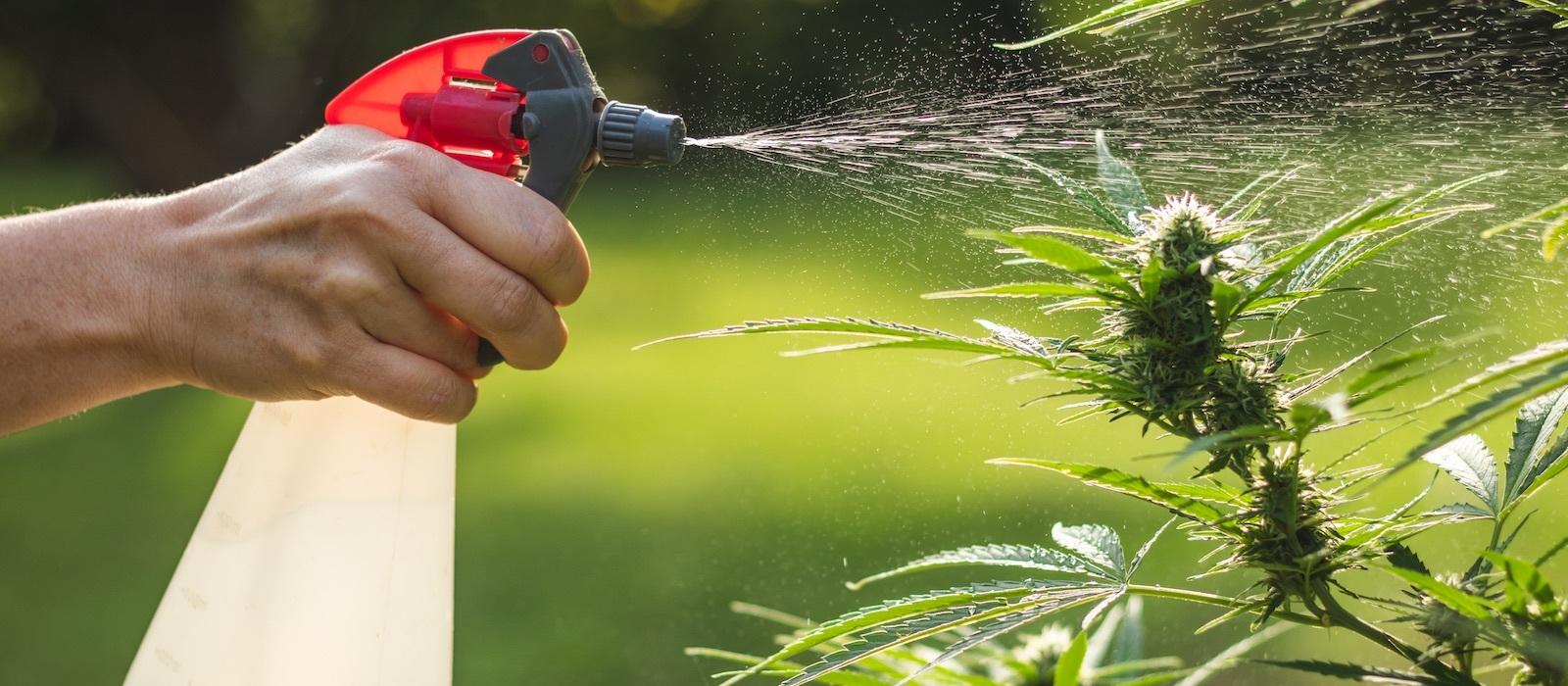 Quali strumenti servono per coltivare canapa all'aperto?