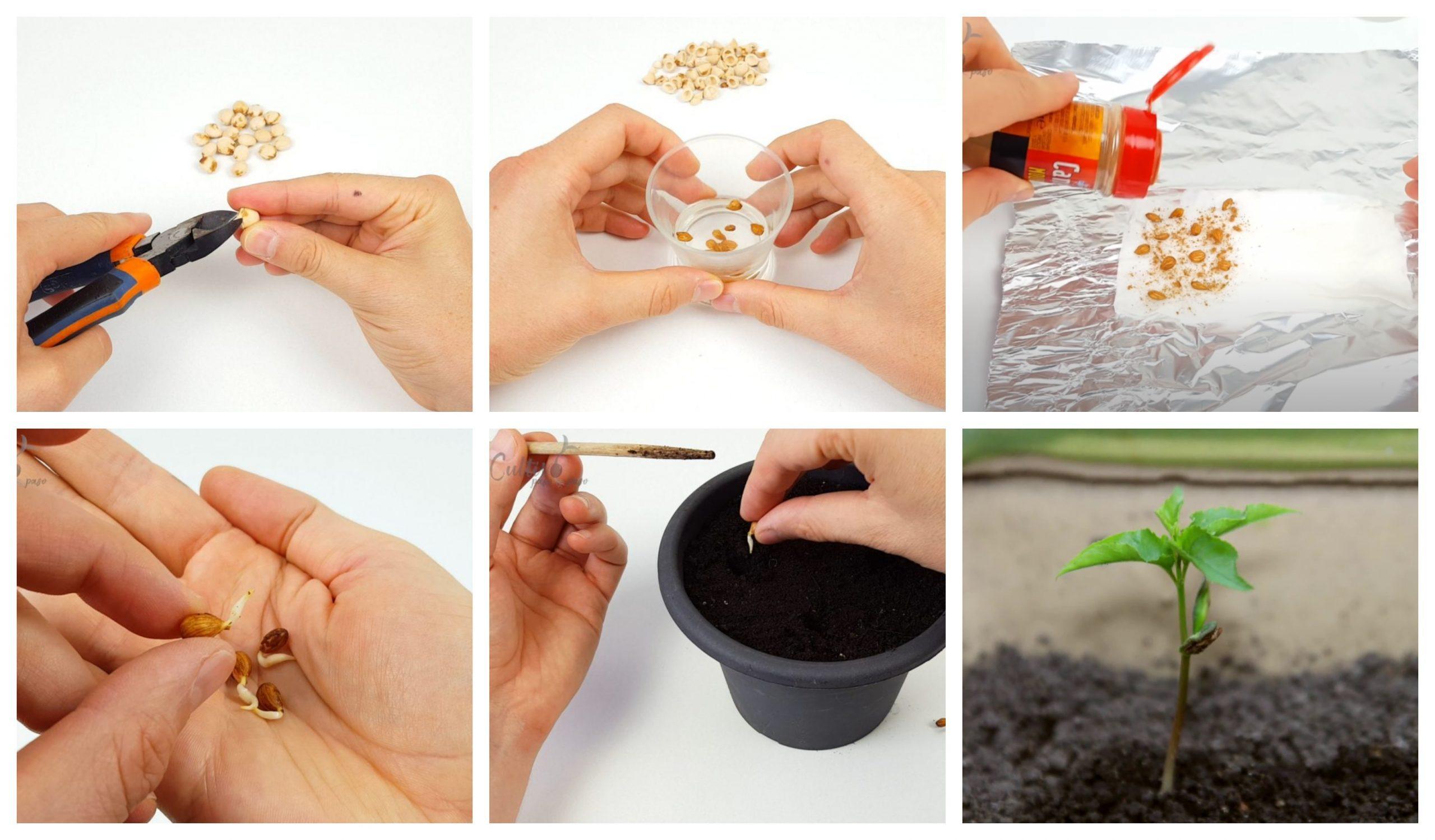 Vediamo ora le varie tecniche di germinazione che possiamo applicare.