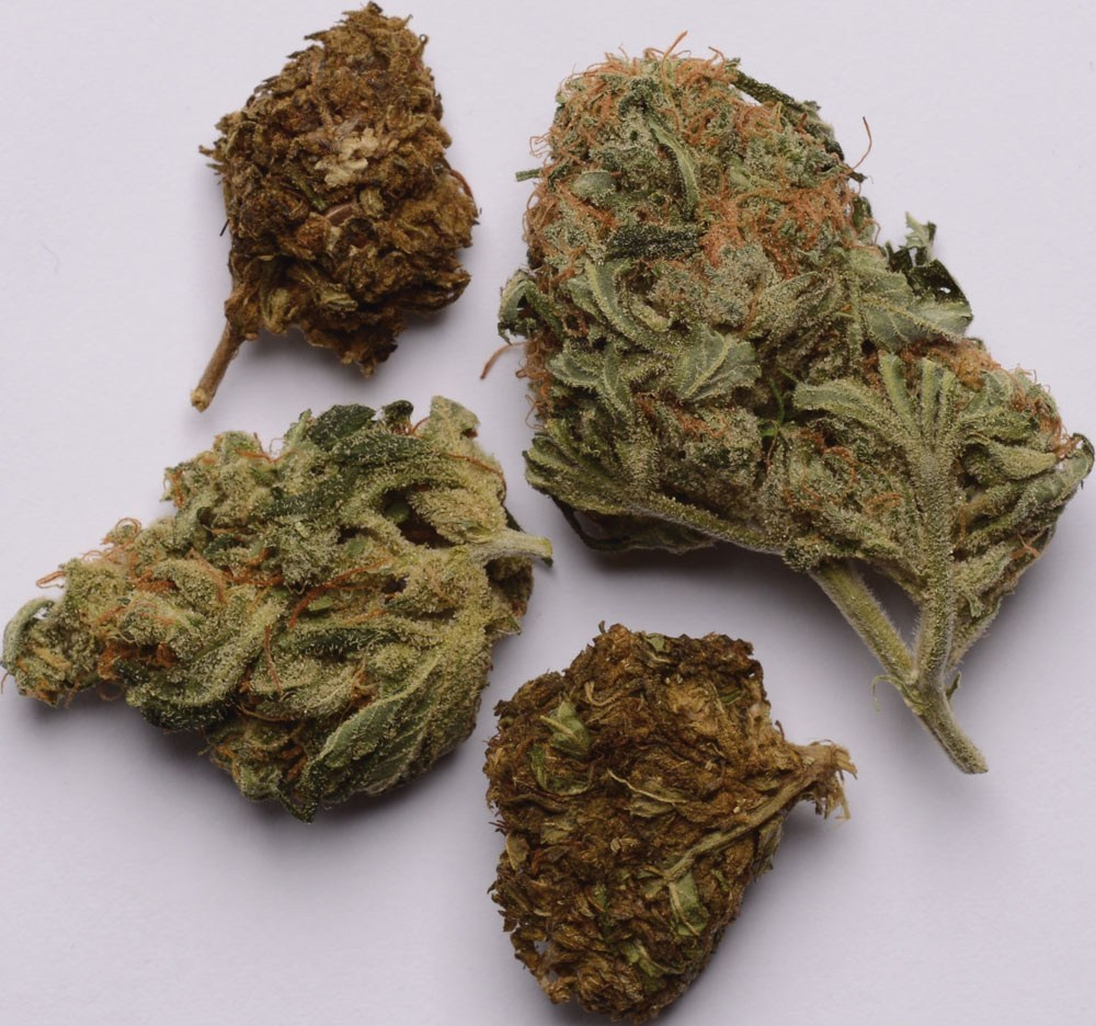 Varieta di marijuana